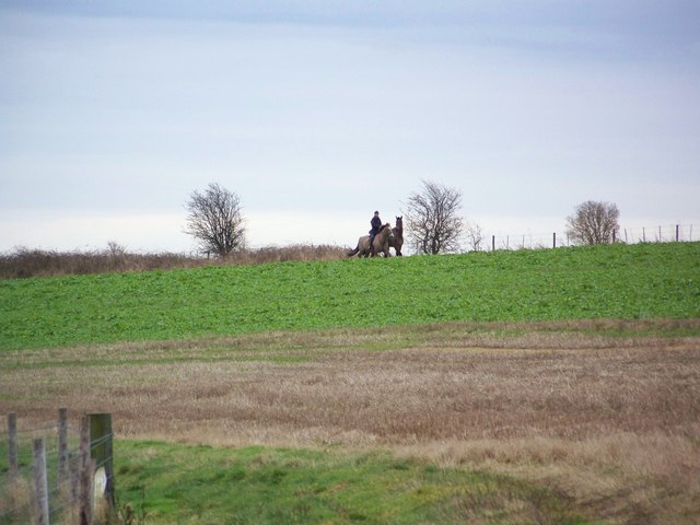 Horses on Swallowcliffe Down