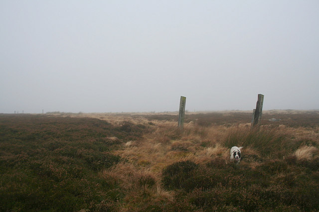 Fence posts atop Carn Mor