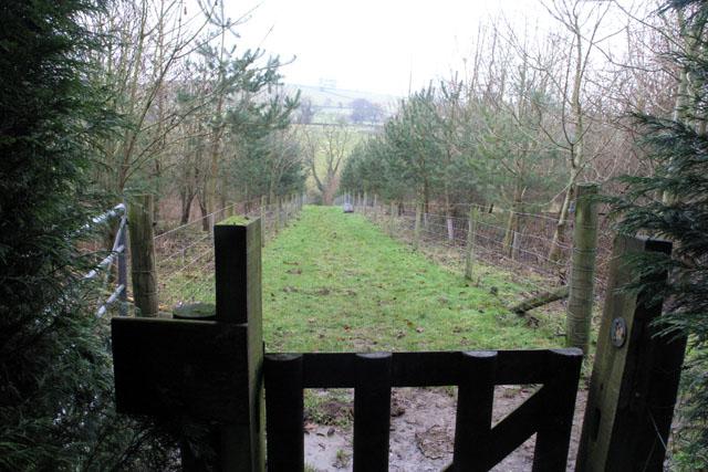 New plantation near Highfields Farm