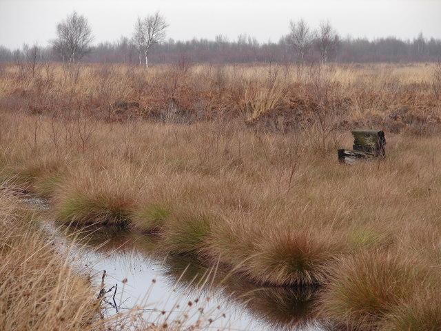 Peat Bog Sculpture