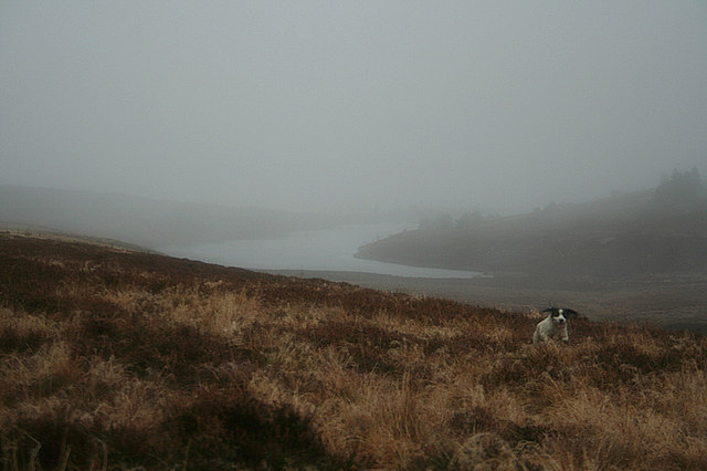 Undampened spirit on a rainy day at Clunas reservoir
