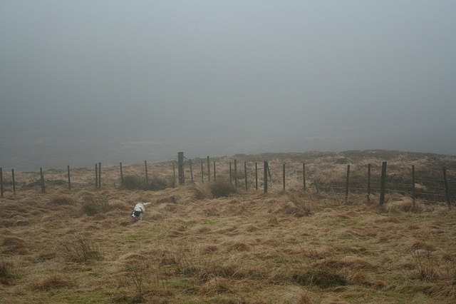 Sheep enclosure fencing on Carn Mor