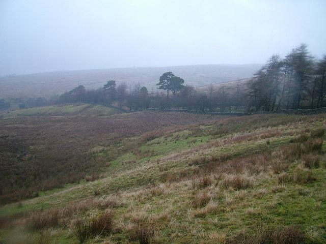 High Pasture Wood