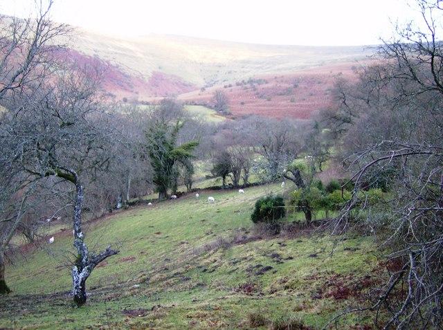 Pasture at Cwm Mawr