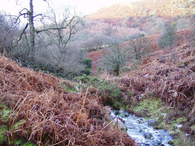 Stream above Cwm Mawr