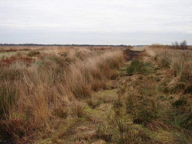 Footpath Through the Humberhead Peatlands