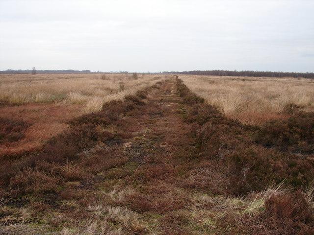 Brown Footpath