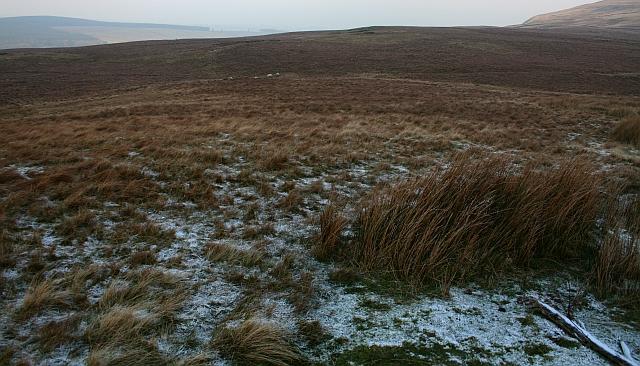 Grouse Moor Near Miry Paddock
