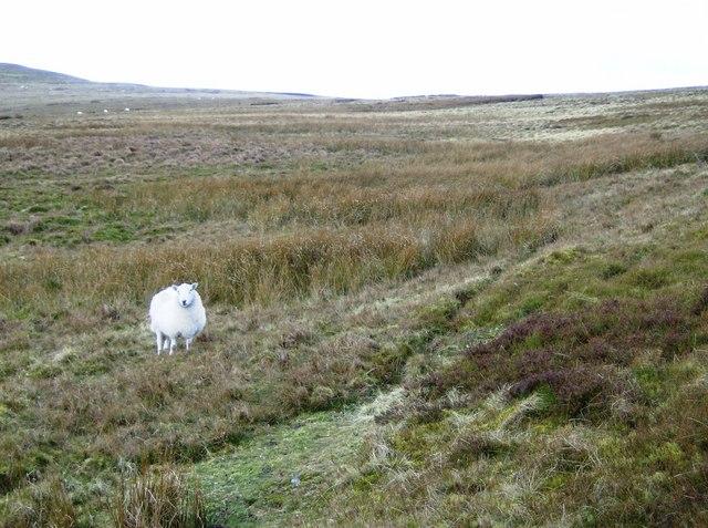 Moorland near summit of Pentwynglas