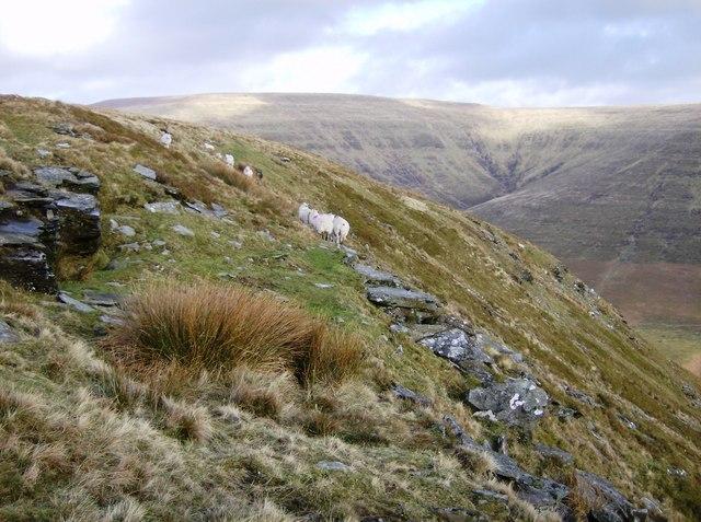 Eastern slope of Mynydd Llysiau