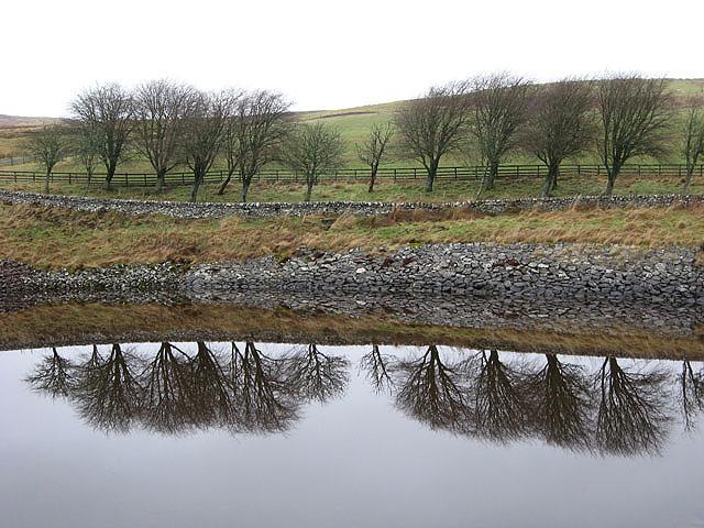 Reflected trees on Alemoor Reservoir