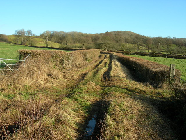 Trackway with Footpath Crossing, near Dulcote