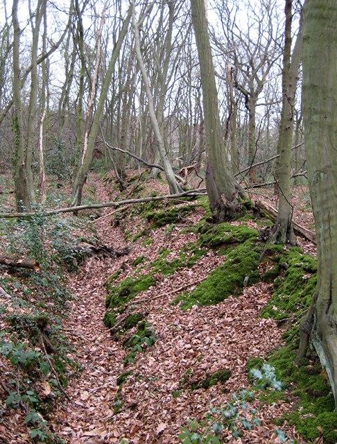 Wood boundary, Tile Wood