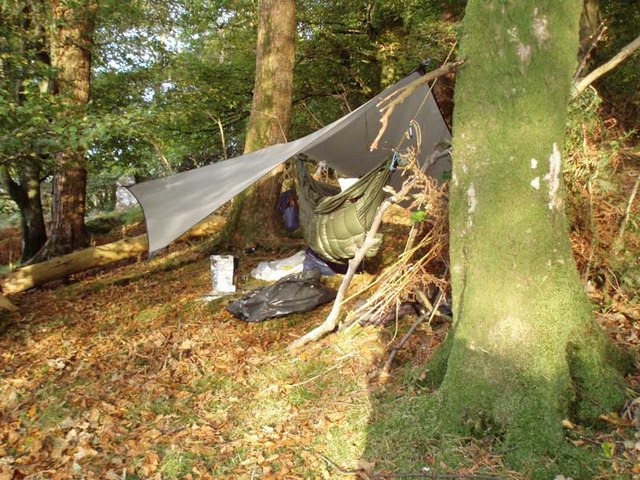Hammock c&ing in broadleaf forest & Hammock camping in broadleaf forest © Nigel Parrish :: Geograph ...