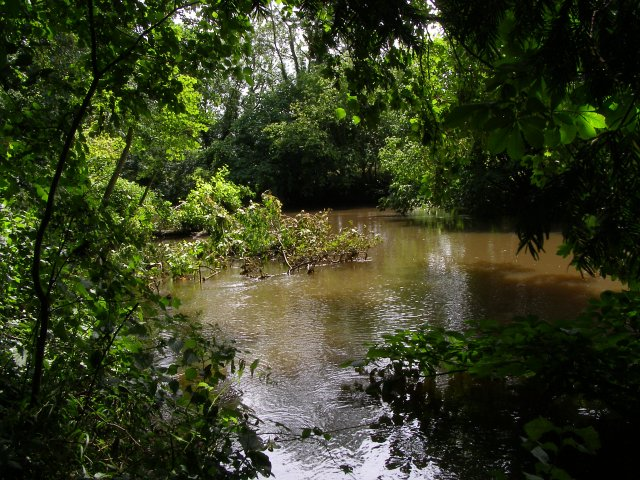 River Stour west of Hod Hill