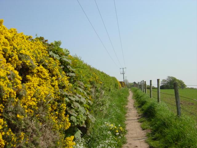 Footpath to Oldfield Farm