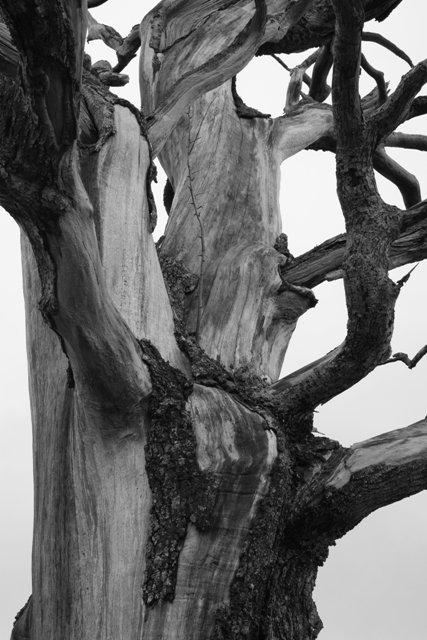Dead Tree on the Road to Derwentfolds
