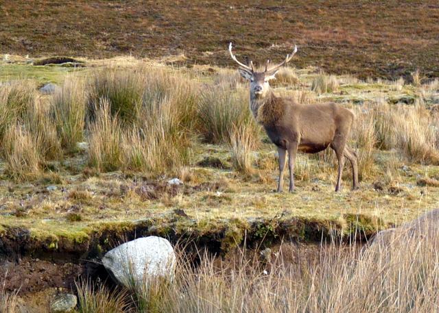 Red deer posing by the road
