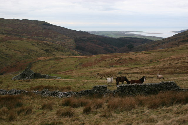 Ponies on the hillside