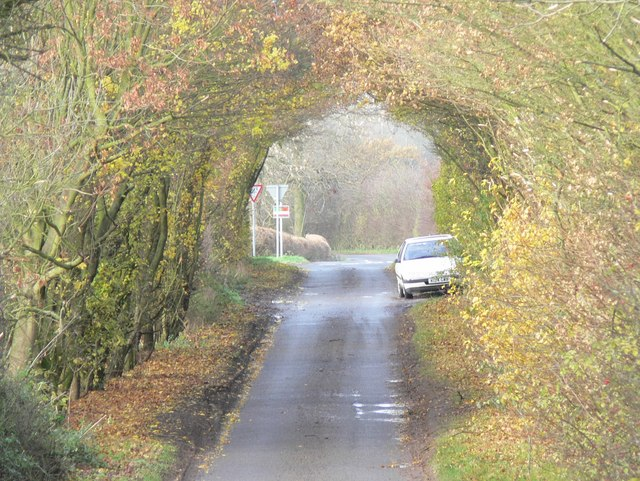 Late autumn on Hill Lane