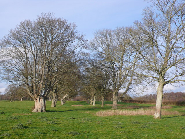 Avenue of Trees at Ilsington, Dorset
