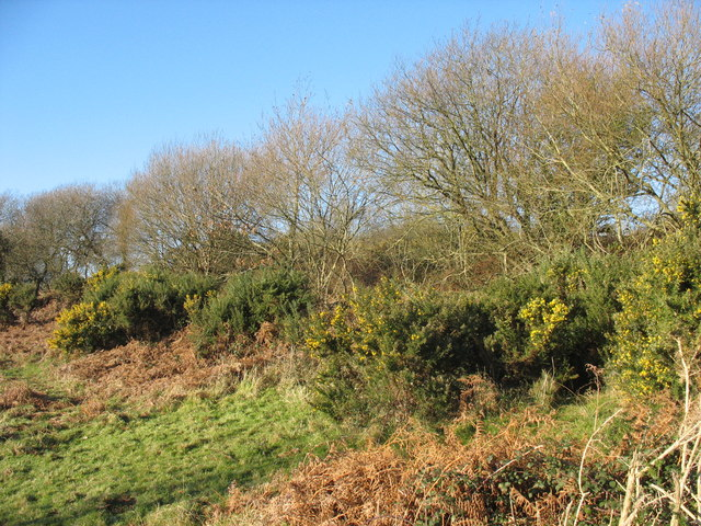 Gorse, bracken and thorns on the rim of the meltwater channel