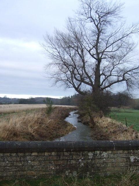Downstream Willow Burn