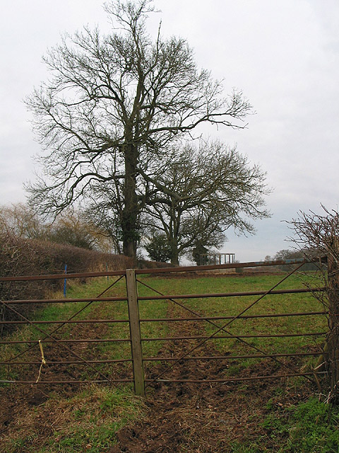 Winter trees at Anthony's Cross