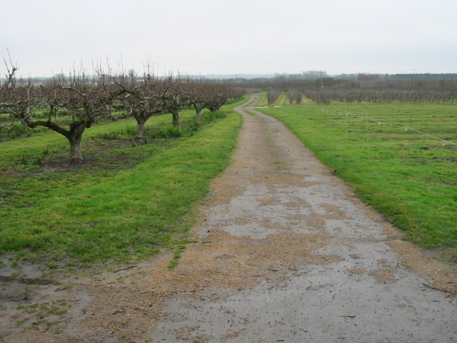 Footpath and farm track through the orchards