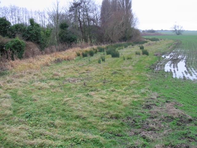 Field margin near Little Knell Farm