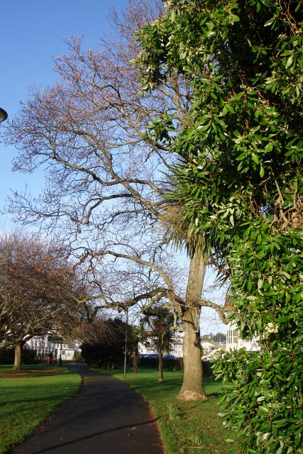 Young's Park, Paignton Footpath and trees