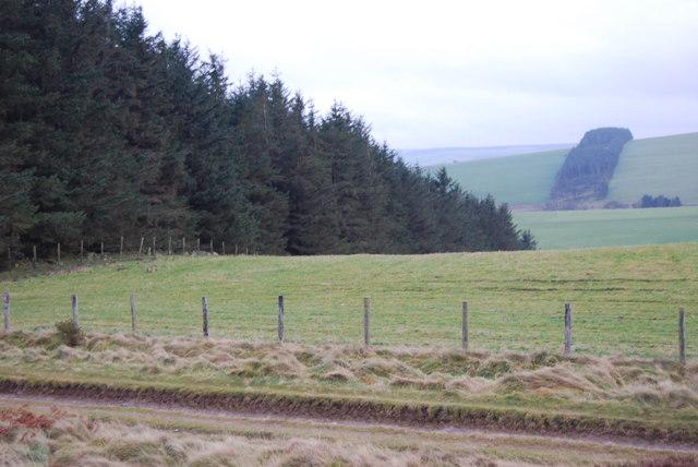 Trees in Ffynnon-Lâs Strip