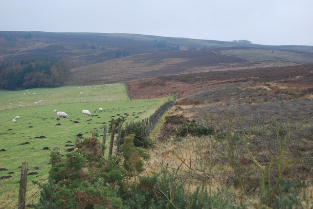 Boundary between the grazings and grouse moor