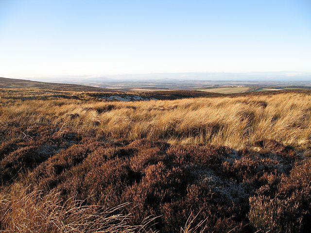 Moorland, Moss Law