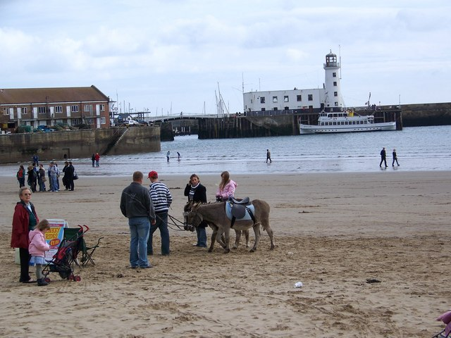 Scarborough Donkeys