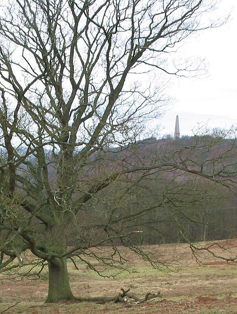 Winter tree near Eastnor Park.
