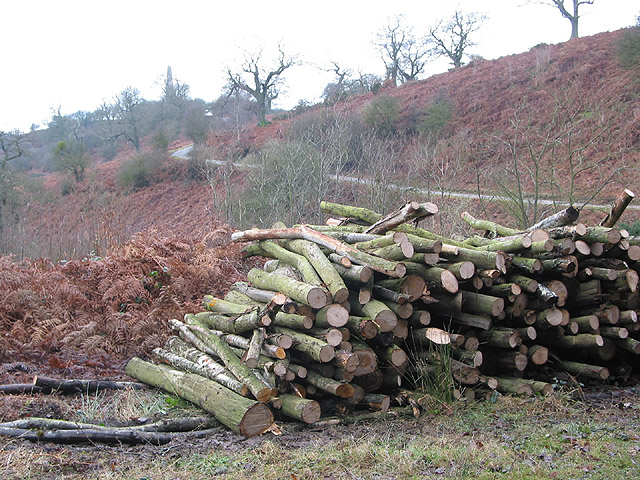 Logpile by the footpath