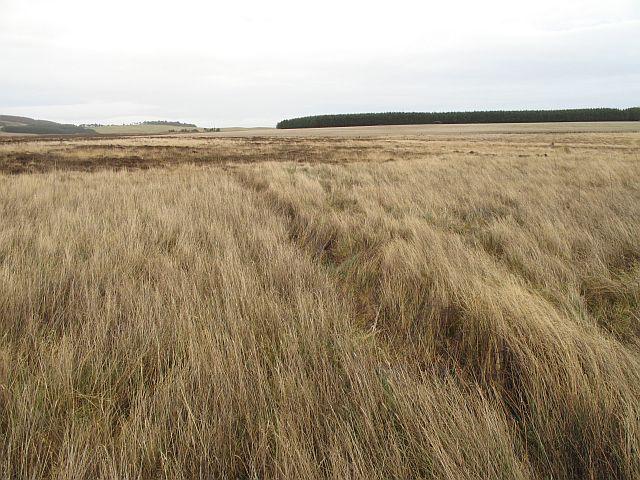 Wetland grazing