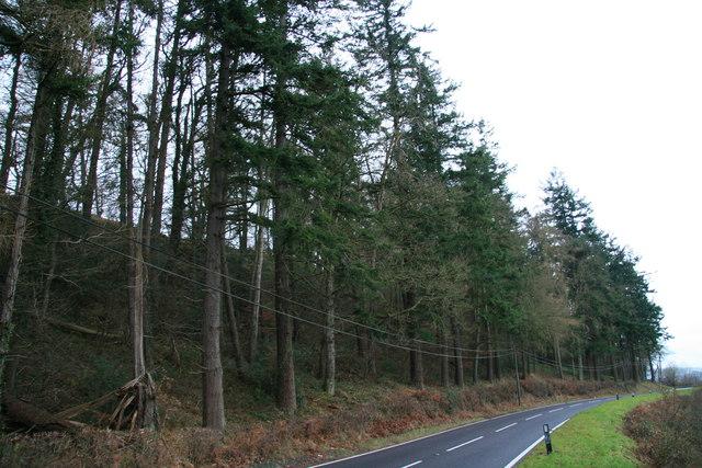 Mixed woodland at Pen-y-banc