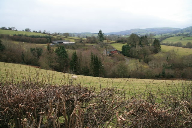 Sheep pasture at Cwm Graig