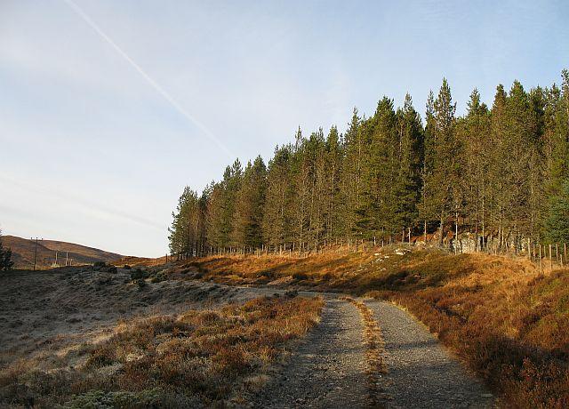Woodland below Carn an t-Seana-bhlàir