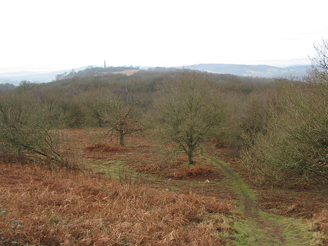 View SW over woodland from Swinyard Hill