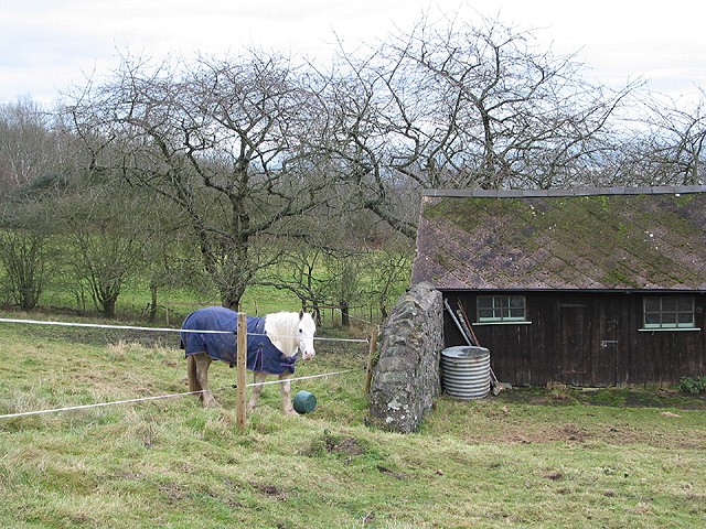 Paddock near Swinyard Hill