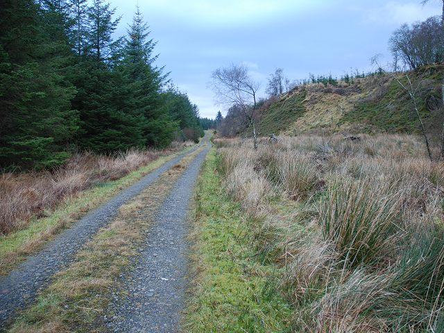 In Knapdale Forest