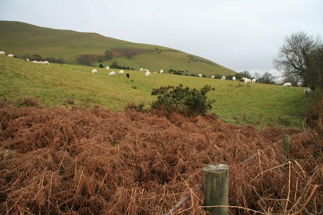 Sheep pastures at Glog