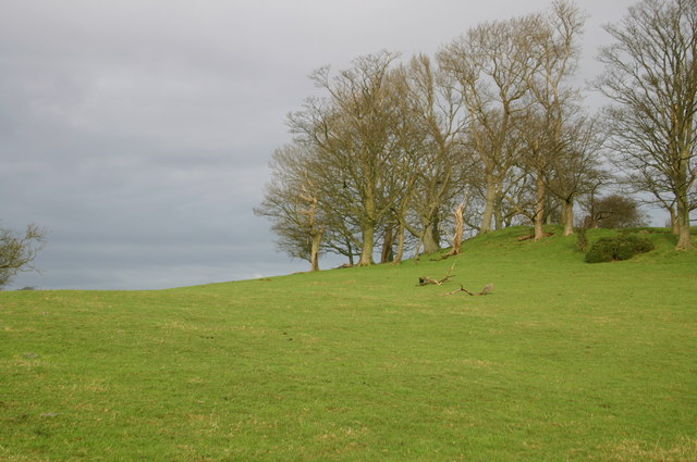 Tree Copse on Hill above The Highgrove