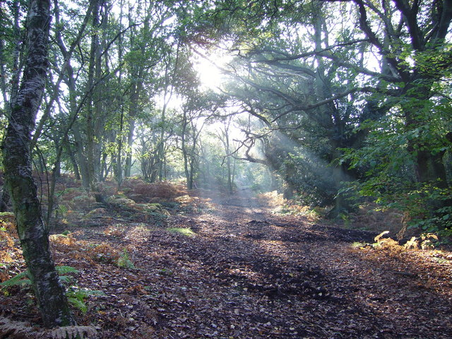 Woodland copse on Yateley Common