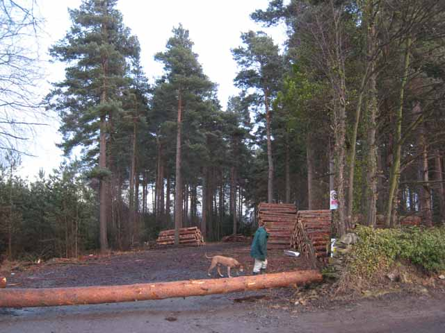 Dukeshouse Wood, Hexham