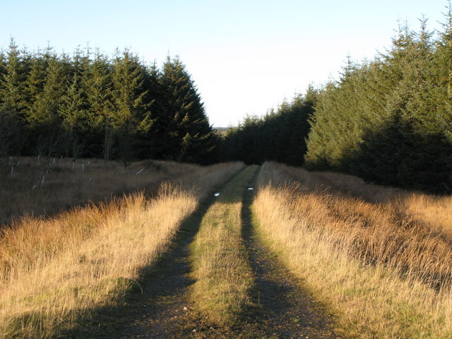 Track into the plantation on Dry Rigg
