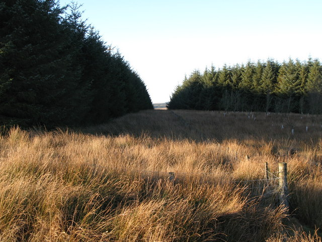 Firebreak in the plantation on Dry Rigg